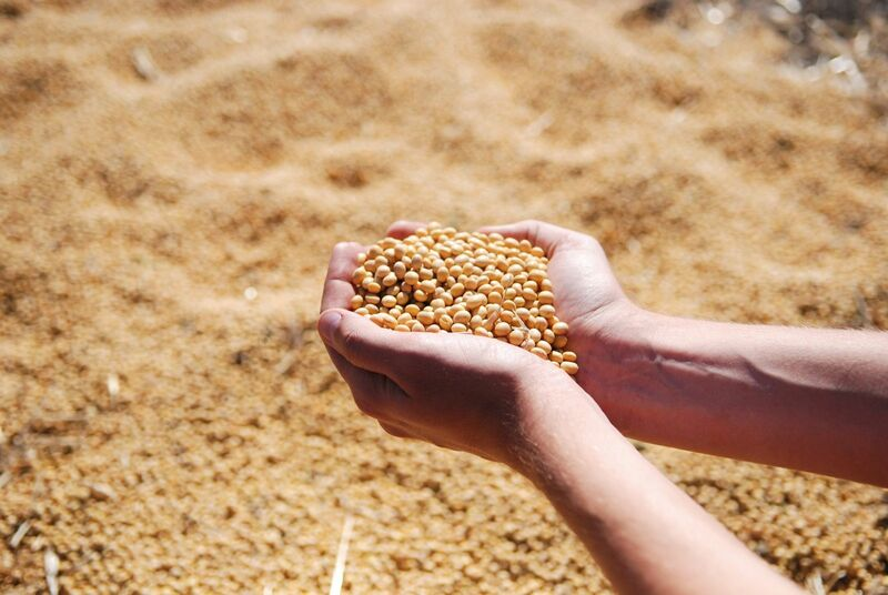 Grain - A hand scooping soybeans