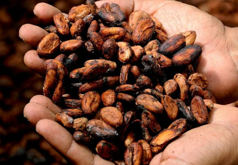 Softs - Hands with Cocoa Beans