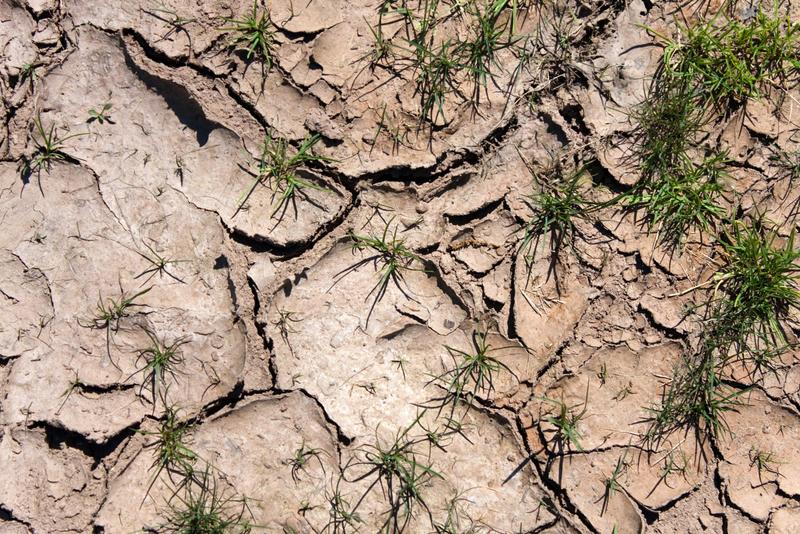 Weather - Desert Field Drought